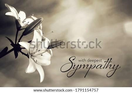 Sympathy card with lily flowers   Foto stock ©