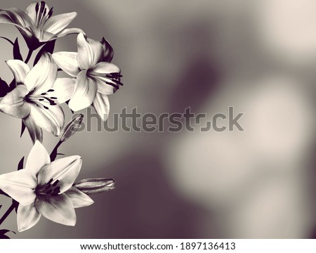Sympathy card with lily flowers. Black and white image Foto stock ©