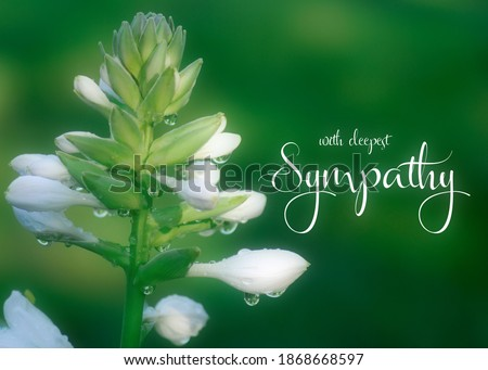 Sympathy greeting card. Condolence card. White flower with water droplets  isolated on green foliage background with soft focus and with deepest sympathy typography. Photo stock ©