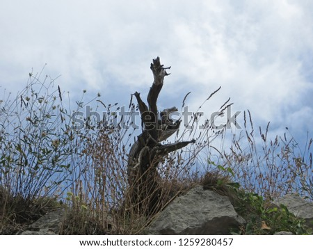 Symphony of dead root, dry grass, rocks and cloudy sky at the Pic Saint Loup (South of France)