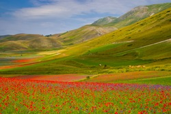 Symphony of natural colors. The summer flowering of Castelluccio di norcia