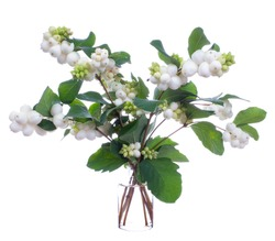 Symphoricarpos albus  (common snowberry) in a glass vessel with water