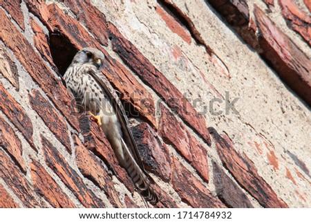 Synanthropic birds living in small town Zdjęcia stock ©