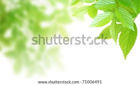 Synthetic background image of foliage leaf