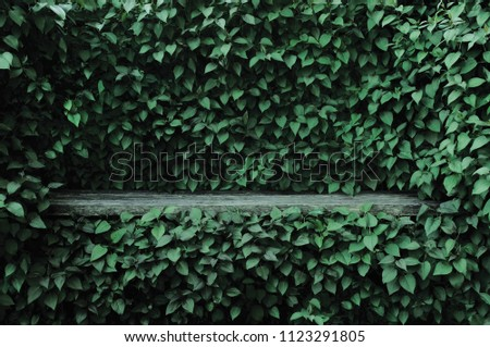Syringa vulgaris common lilac plants green leaf hedge background. Old aged dark gray weathered wooden bench niche, large detailed scenic horizontal shrubs greenery closeup. Formal garden shrub leaves #1123291805