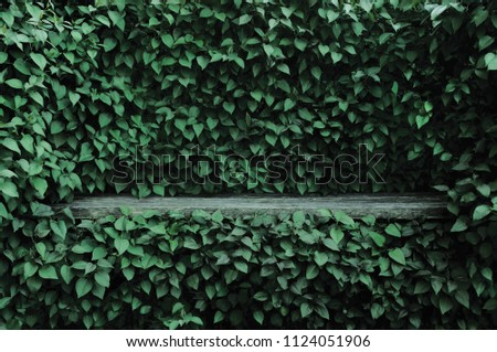 Syringa vulgaris common lilac plants green leaf hedge background. Old aged dark gray weathered wooden bench niche, large detailed scenic horizontal shrubs greenery closeup. Formal garden shrub leaves #1124051906