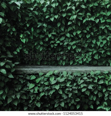 Syringa vulgaris common lilac plants green leaf hedge background. Old aged dark gray weathered wooden bench niche, large detailed scenic horizontal shrubs greenery closeup. Formal garden shrub leaves #1124053415