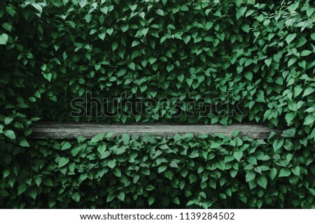 Syringa vulgaris common lilac plants green leaf hedge background. Old aged dark gray weathered wooden bench niche, large detailed scenic horizontal shrubs greenery closeup. Formal garden shrub leaves #1139284502