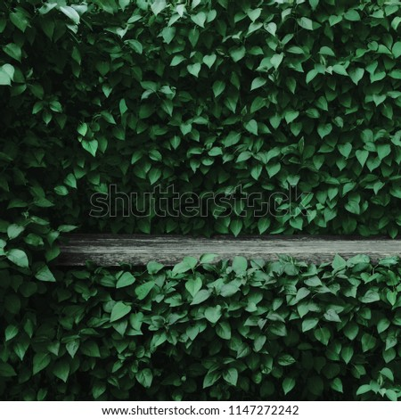 Syringa vulgaris common lilac plants green leaf hedge background. Old aged dark gray weathered wooden bench niche, large detailed scenic horizontal shrubs greenery closeup. Formal garden shrub leaves #1147272242