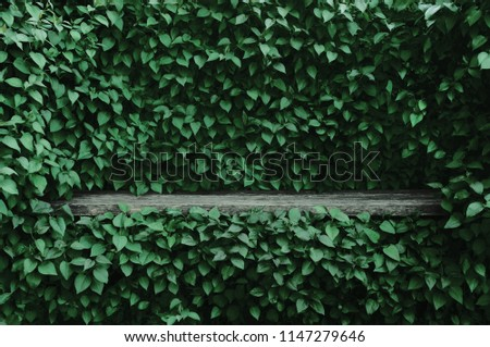 Syringa vulgaris common lilac plants green leaf hedge background. Old aged dark gray weathered wooden bench niche, large detailed scenic horizontal shrubs greenery closeup. Formal garden shrub leaves #1147279646