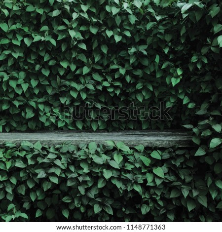 Syringa vulgaris common lilac plants green leaf hedge background. Old aged dark gray weathered wooden bench niche, large detailed scenic horizontal shrubs greenery closeup. Formal garden shrub leaves #1148771363