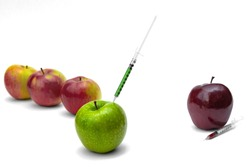 Syringe injection into a green apple. Genetic modified foods