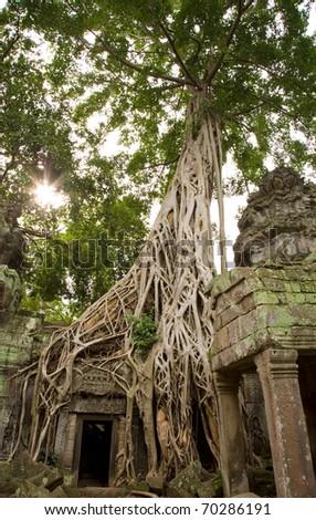 Ta Prohm - Cambodia