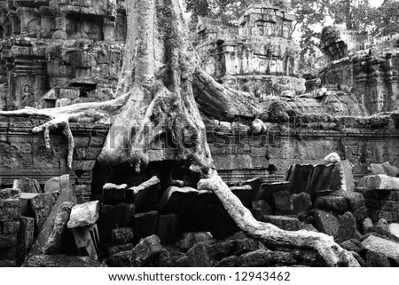 """Ta Prohm Temple at Cambodia.  The one featured in """"Tomb Raider"""""""