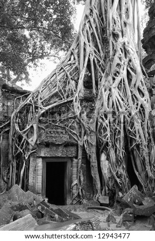 "Ta Prohm Temple at Cambodia.  The one featured in ""Tomb Raider"""