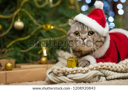 Tabby and the happy cat. Christmas season 2018, new year, holidays and holidays #1208920843