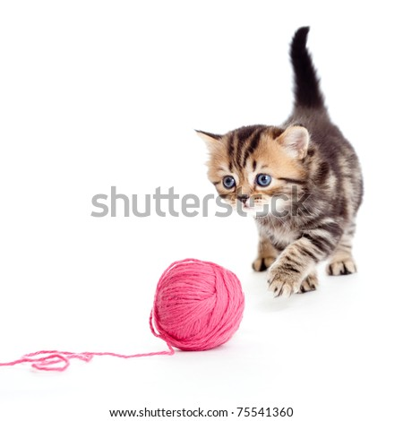 tabby british kitten playing red clew or ball isolated - stock photo