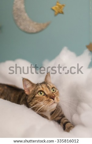 Tabby cat among the clouds with silver moon and gold stars