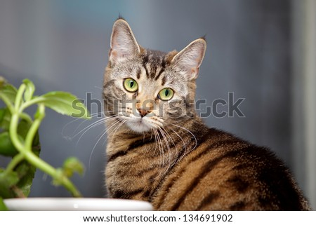 Tabby cat and flower on the window