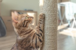 Tabby cat and scratching post in the room.