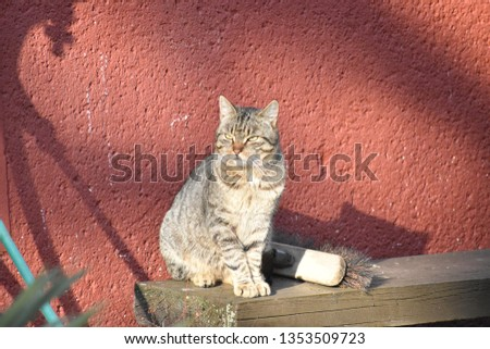 Tabby cat - domestic cat #1353509723