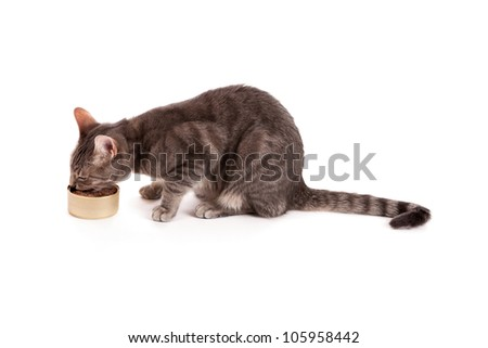 Tabby cat eating canned food isolated on white