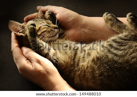 Tabby Cat in the hands of the owner.