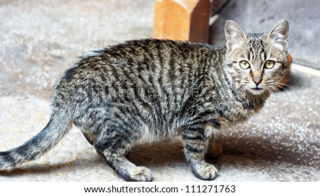 Tabby cat is curiously look at you