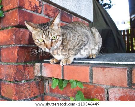 Tabby cat lies on brick wall