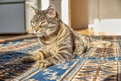 Tabby cat lying on a colorful carpet in the sun.