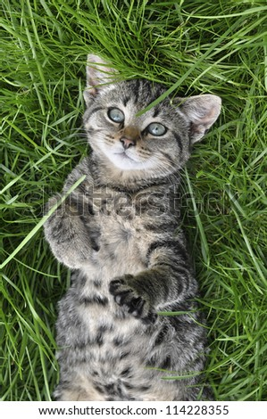 Tabby cat lying on green grass