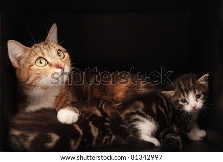 Tabby Cat - mother and babies