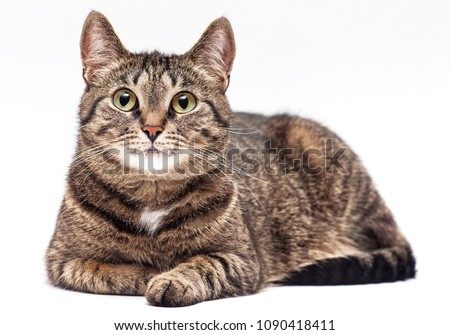 Tabby cat on white background. #1090418411