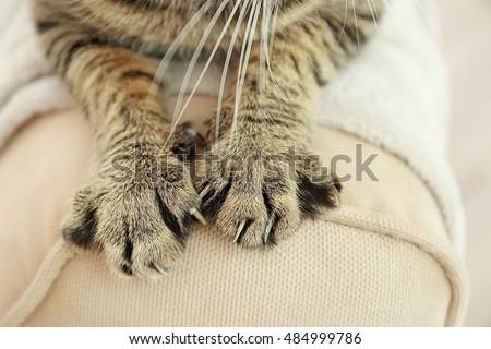 Tabby cat paws on backrest #484999786