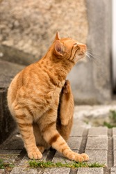 Tabby cat scratching next to a wall