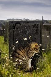 Tabby cat sitting by gravestone.