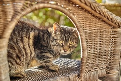 Tabby cat sitting on a garden chair in the sun.