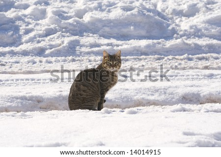 Tabby cat sitting on a snow covered road