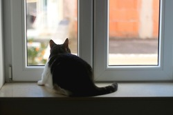 Tabby cat sitting on a window sill and looking outside. Selective focus.