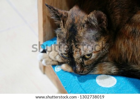 tabby cat sleep on blue doormat and look at camera, making face not like to take a pic
