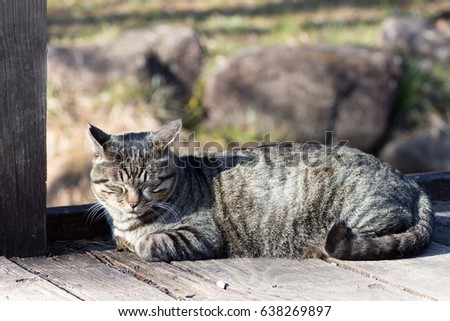 Tabby cat sleeping on a  wood deck