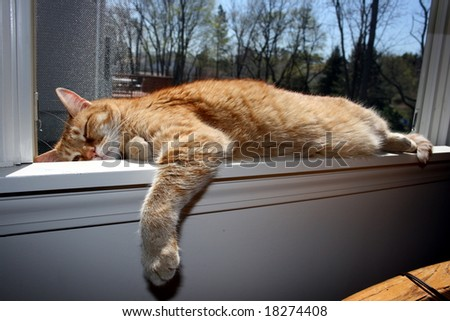 Tabby Cat Sleeping on Window Ledge