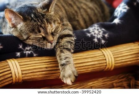 Tabby Cat sleeping on winter blanket - Selective focus - stock photo