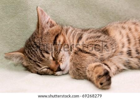 Tabby cat sleeps on green