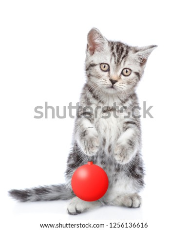 Tabby cat standing on hind legs with christmass ball and looking at camera. isolated on white background #1256136616