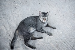 Tabby cat with beautiful green eyes lying on sand beach outdoors