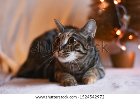 tabby cat with big eyes #1524542972
