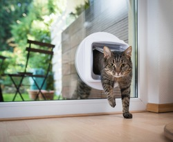 tabby european shorthair cat entering the room through cat flap