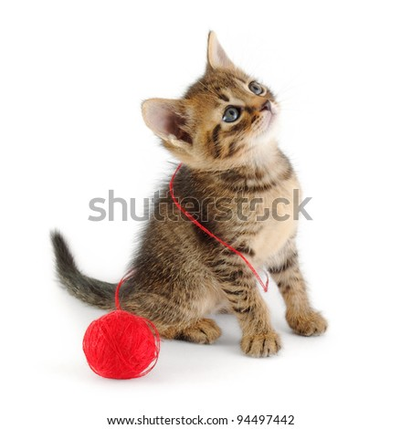 tabby kitten entangled with red thread of clew, looking up