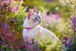 Tabby kitten having rest in the garden